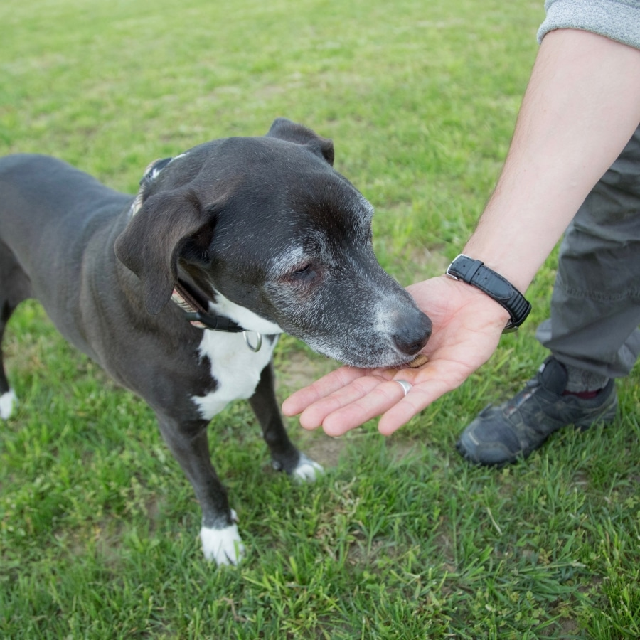 cane che riceve un premio siamo addestratori cinofili enci carmagnola