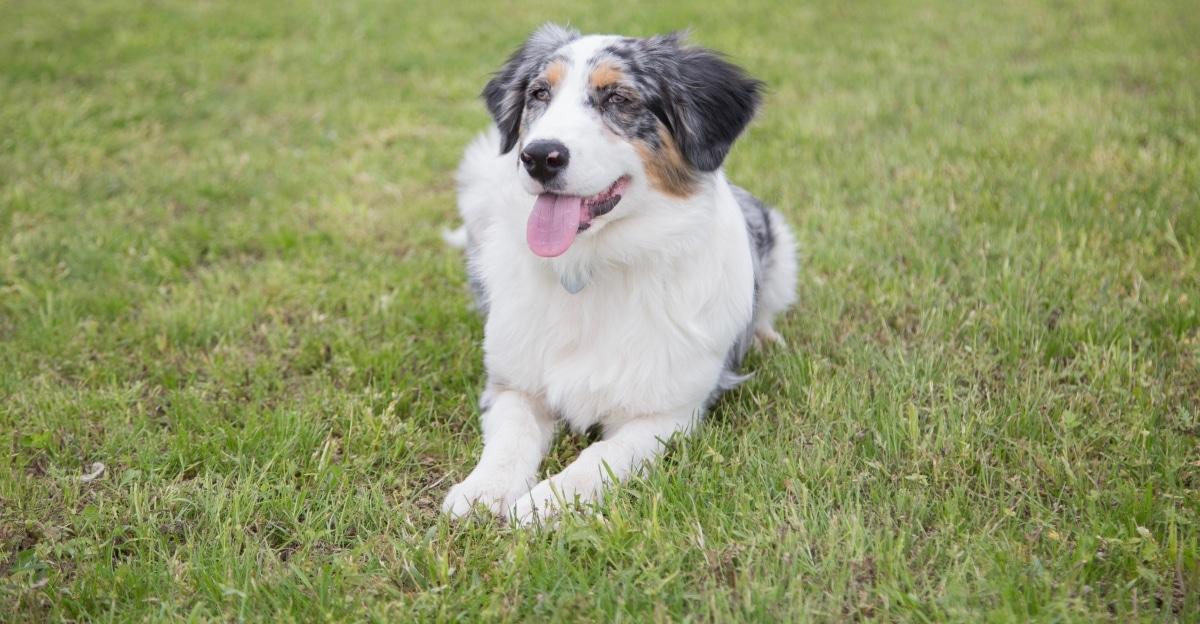 Corso Educazione Base percorso dove si imparerà a comunicare nel modo corretto con il proprio cane