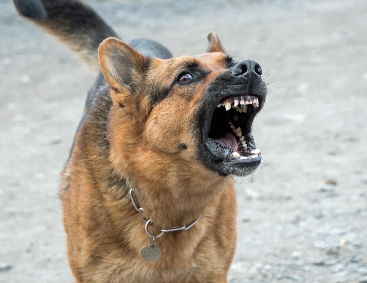 Cane con problemi di aggressività verso gli altri – corso di recupero comportamentale