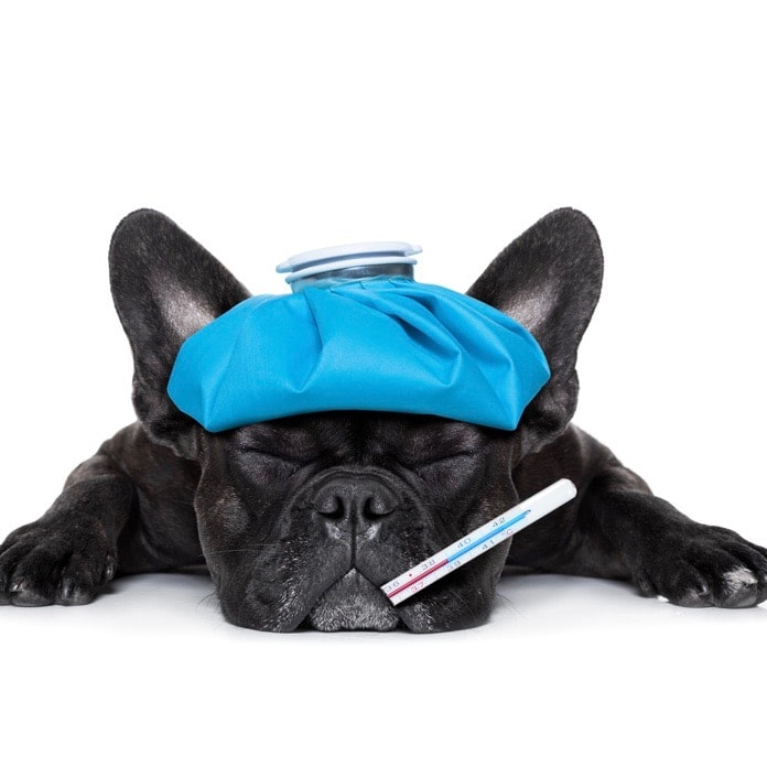 cane malato- corso di primo soccorso veterinario carmagnola