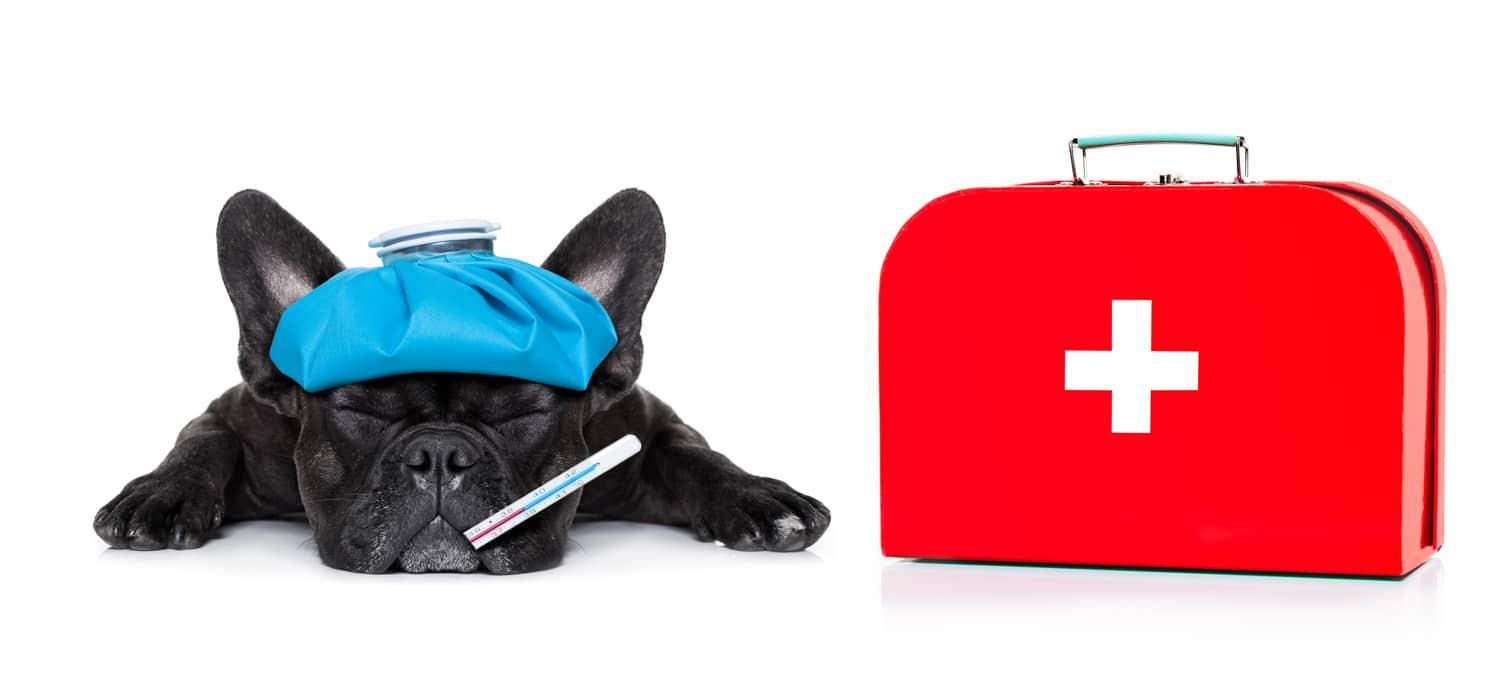 cane malato con cassetta pronto soccorso corso di primo soccorso veterinario carmagnola