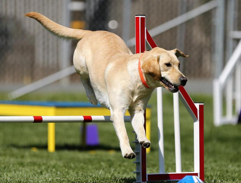 cane che atterra dopo aver fatto un salto