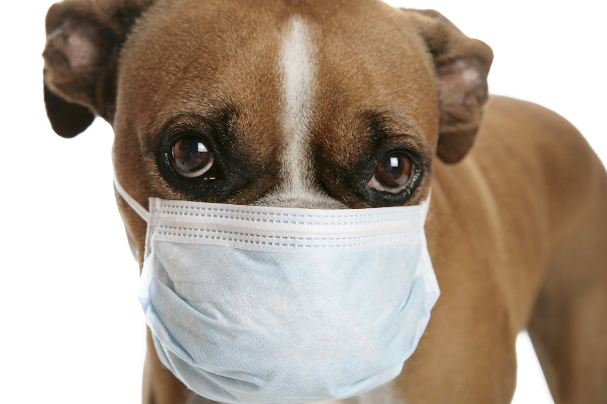 cane con la mascherina coronavirus