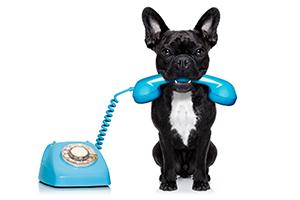 cane-telefono-blu
