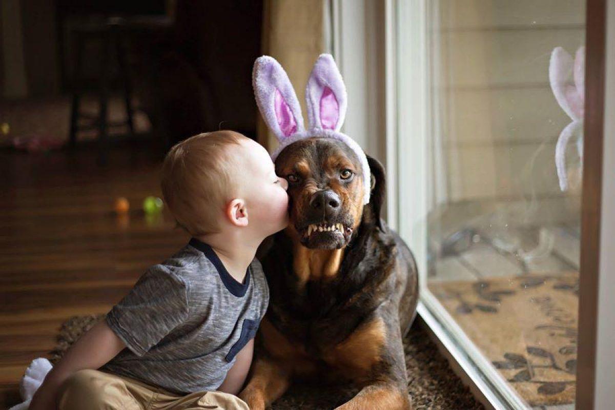 comportamento cane e bambino